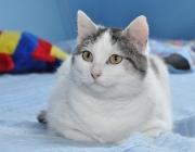 005. kotka o imieniu ADELKA