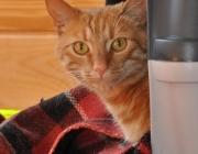 013. kotek o imieniu Rudy