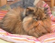 017. koteczka o imieniu MURIEL