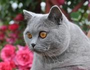 027.kotek o imieniu RICO