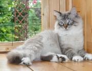 033. kotek o imieniu BACARDI