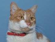 035. kotek o imieniu RUDI