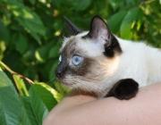 039. koteczka o imieniu JASMIN
