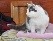 041. koteczka o imieniu NIAKA