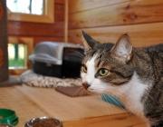 043. KUZIA w domku dla kotow