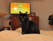 044. kotka o imieniu ZIZA