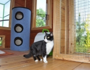054. EDZIO w domku dla kotow