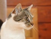 075. koteczka RYSIA - portret