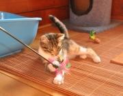 076. koteczka PIXI w czasie codziennych zabaw
