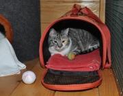 080. koteczka o imieniu SYSKA
