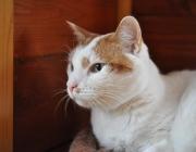 096. kotek o imieniu KOTEK