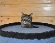 098. kotek o imieniu ZBIK