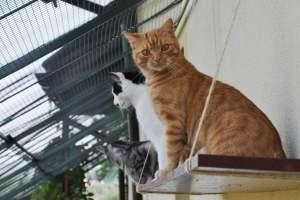 koty w duzej wolierze