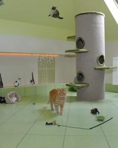 Koty w zielonym apartamencie