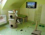 Zielony apartament dla kotow