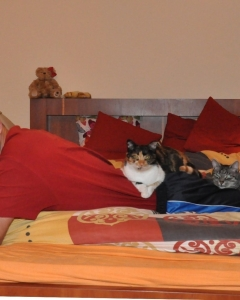 007. ja z kotami