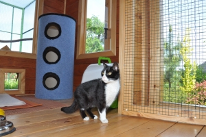 EDZIO-w-domku-dla-kotow