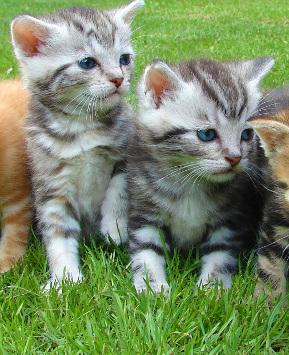 zabezpieczenia balkonów dla kota