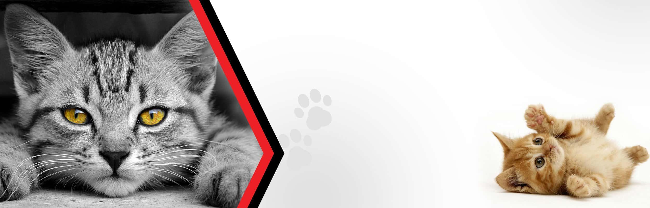 Adopcje kotów